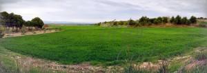 Campo de trigo en Las Pedrosas