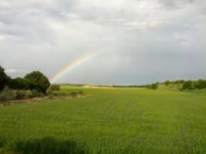 Arco iris y trigo en Las Pedrosas