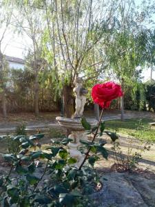 Rosa en el Parque de Las Pedrosas